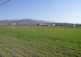 Pla de Rosanes
