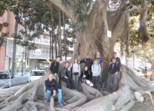 El Grup de Caminants al ficus monumental
